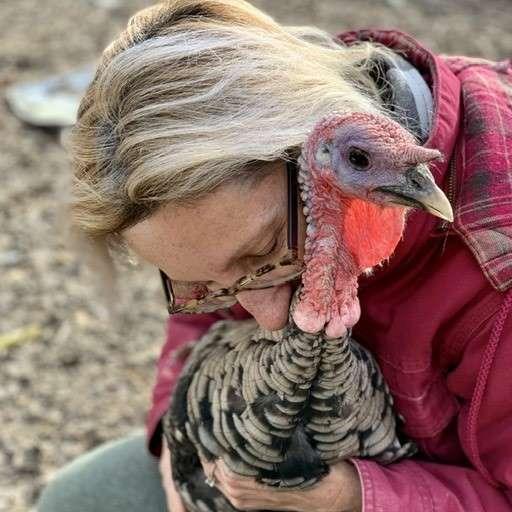 loving turkey