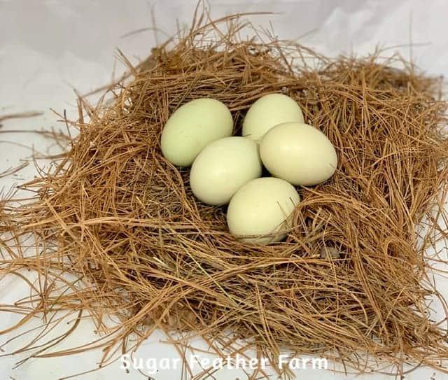 Fauvacana Eggs
