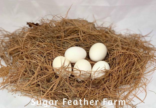 Silkie Eggs