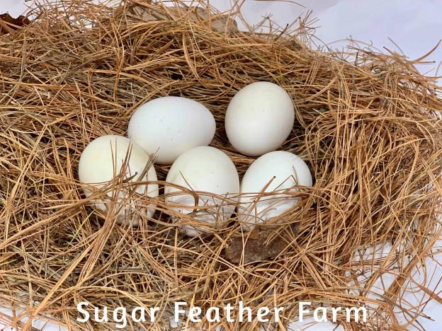 Tolbunt Polish Eggs