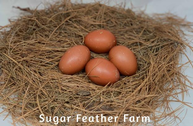 Copper Maran Egg