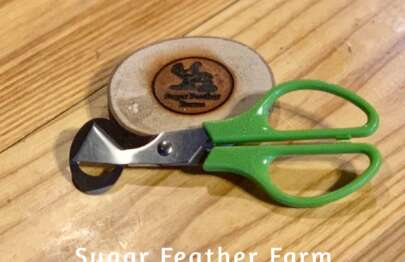 quail egg scissors